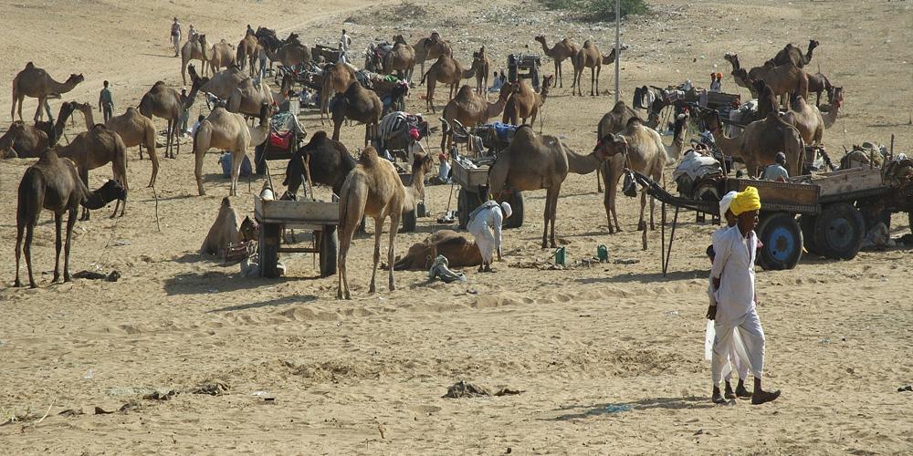 View of Pushkar Camel Fair Rajasthan photograph by Raphael Shevelev