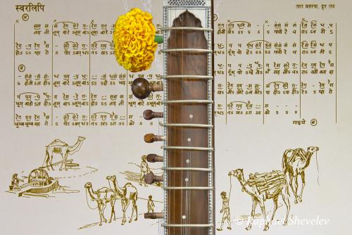Best Exotic Marigold Sitar