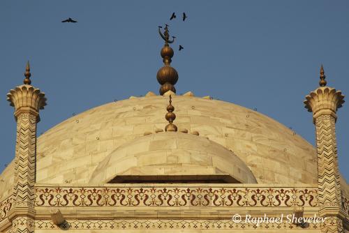 Birds over Taj