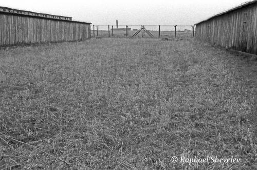 The Grass Majdanek