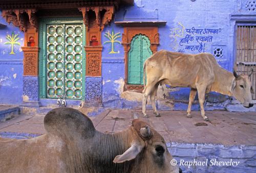 Jodhpur Rajasthan Brahmapuri wedding house photograph by Raphael Shevelev