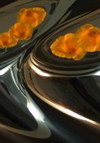 Poppy Vessels abstract image digital art photograph Raphael Shevelev