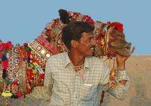 Decorated camel at Pushkar Fair Rajasthan photograph by Raphael Shevelev